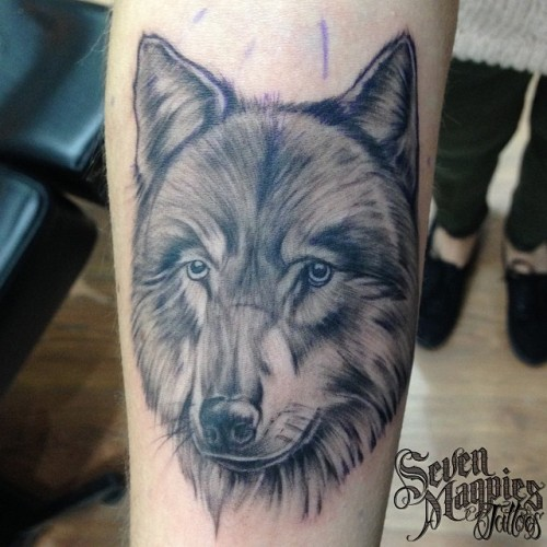 Quick_little_wolfs_head_from_last_week__sevenmagpiestattoos